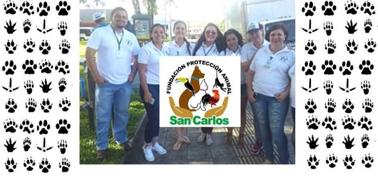 Promueven fundación de protección animal en San Carlos