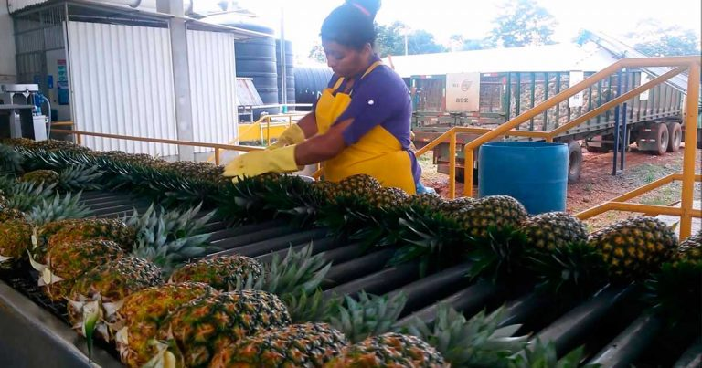 Agro local pide disminuir cargas sociales para evitar la informalidad