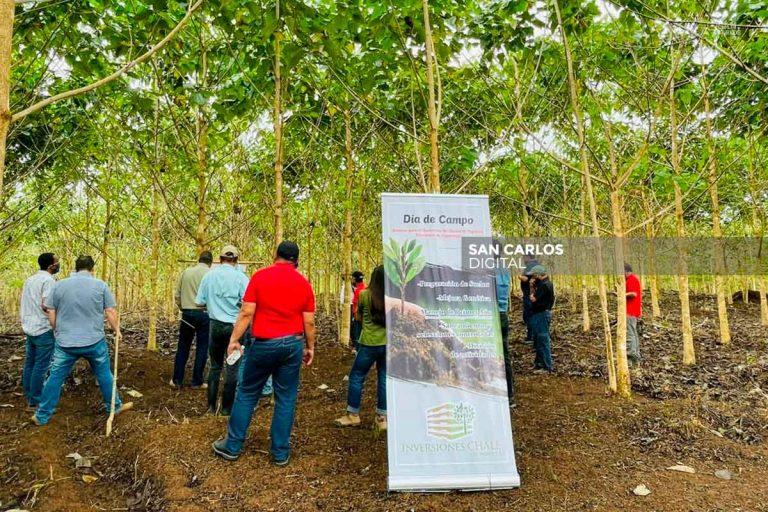 Empresarios forestales de Cutris piden que producción sea de menos años